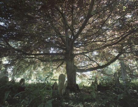 Tree St. Laurence